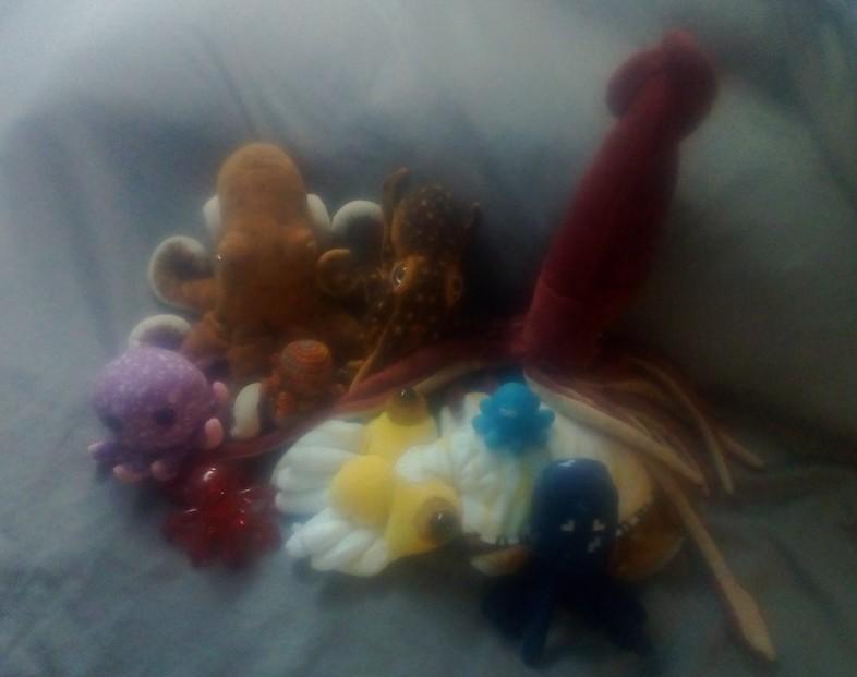 Cephalopod Collection