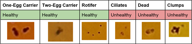 Breakdown of the 6 rotifer classes