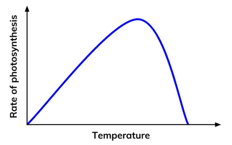 Temperature and the Rate of Photosynthesis