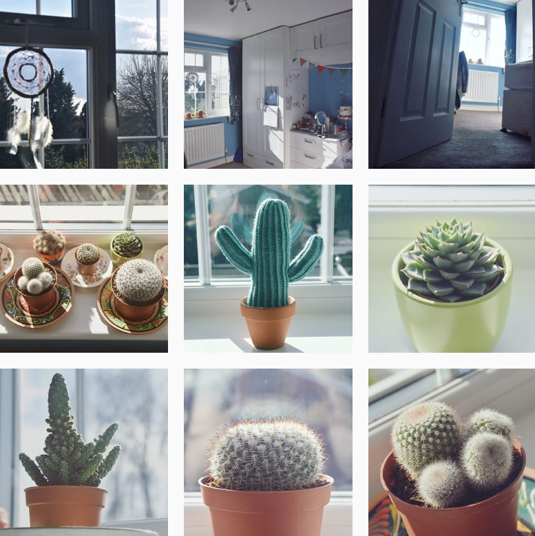 A collection of cactus photos and photos of my room