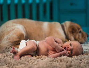 Do Dogs Know What Babies Are?