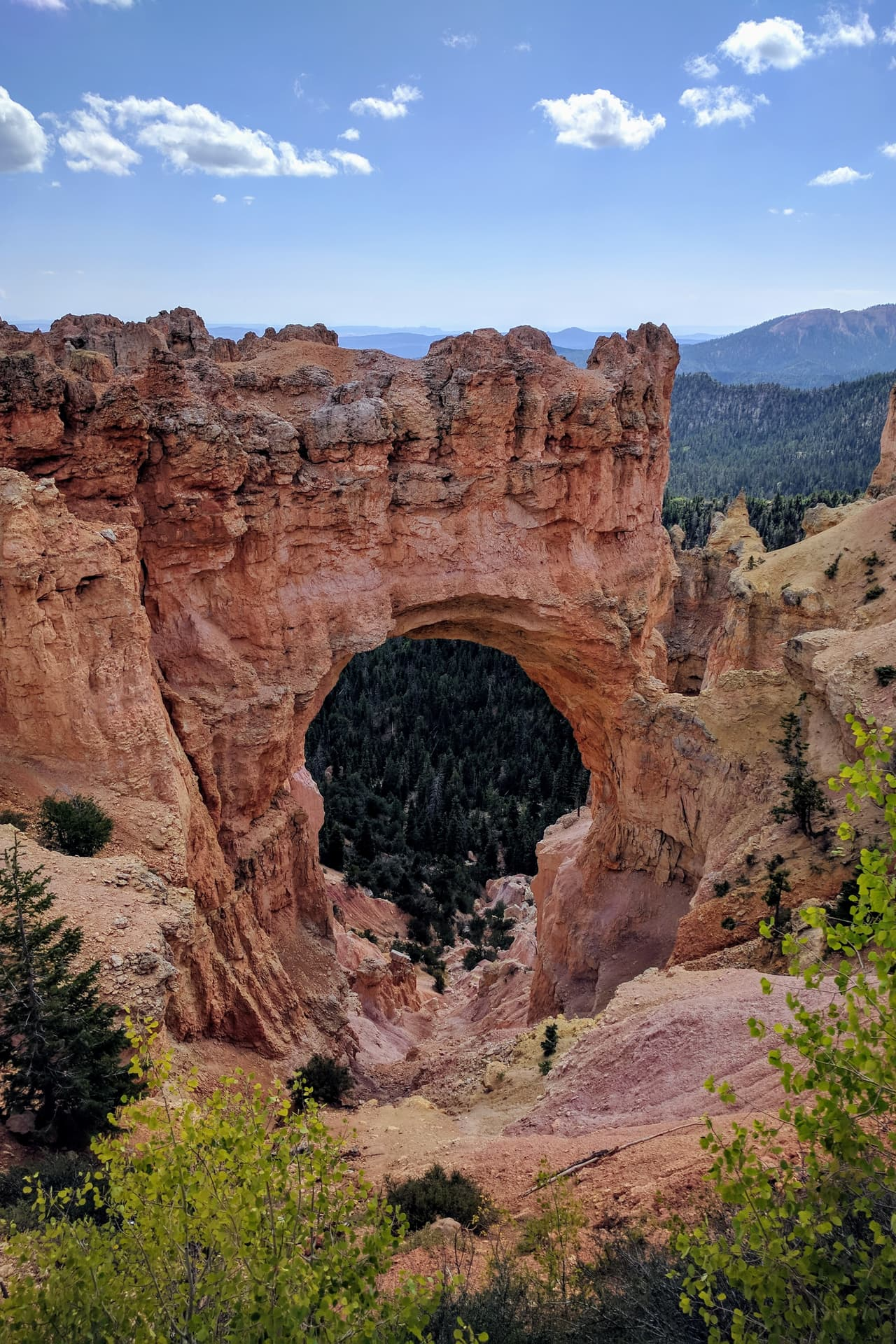 An arch in a fin of rock extending from the South Wall of Bryce Canyon. Pine trees are beginning to grow in the steep gulch descending through the arch.