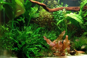 Aquarium Accessories Can Beautify the Fish Tank Appearance