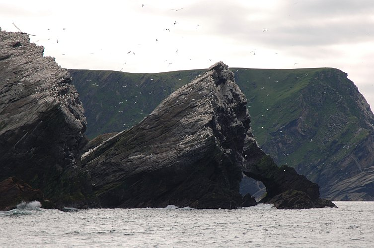 Unst cliffs - home to a variety of wildlife