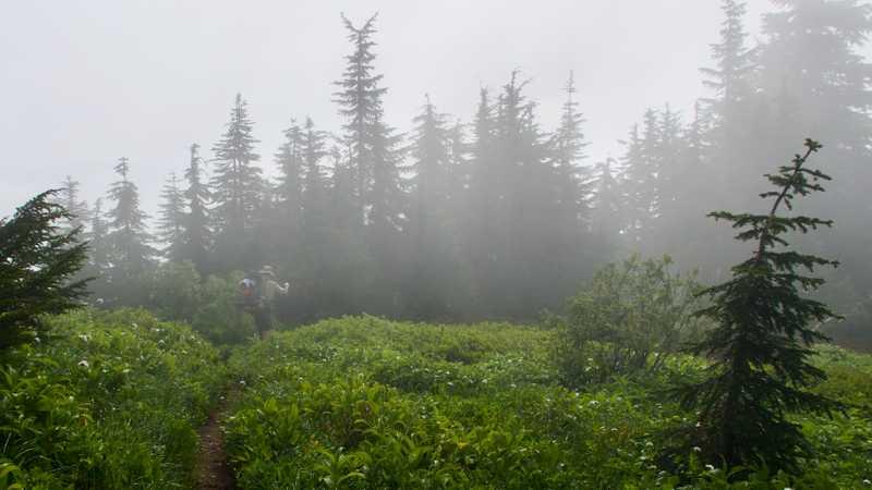 Ralph walking through a foggy meadow near the summit of Grizzly Peak