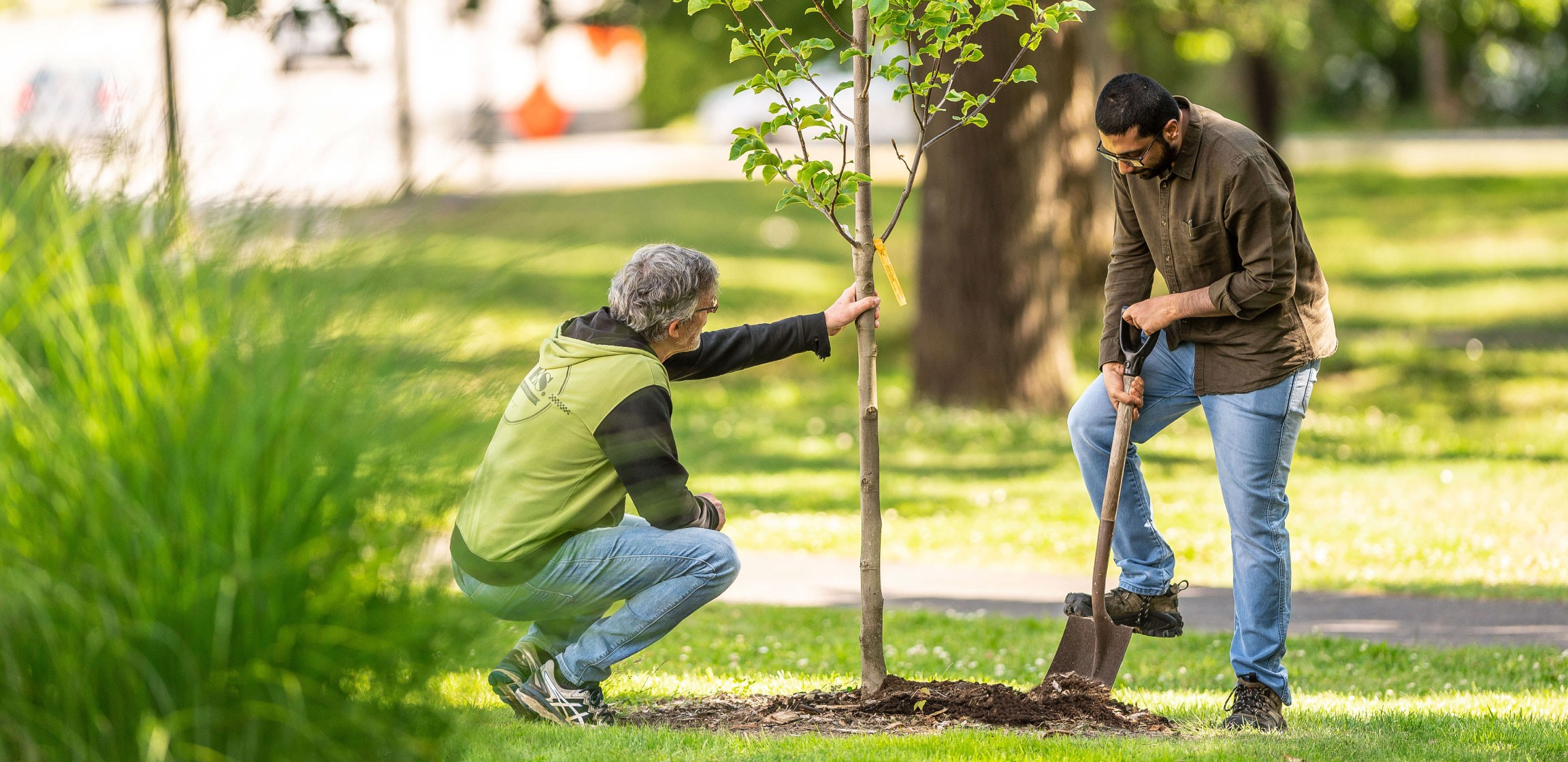 Two people plant a new tree to help fight climate change in their neighbourhood