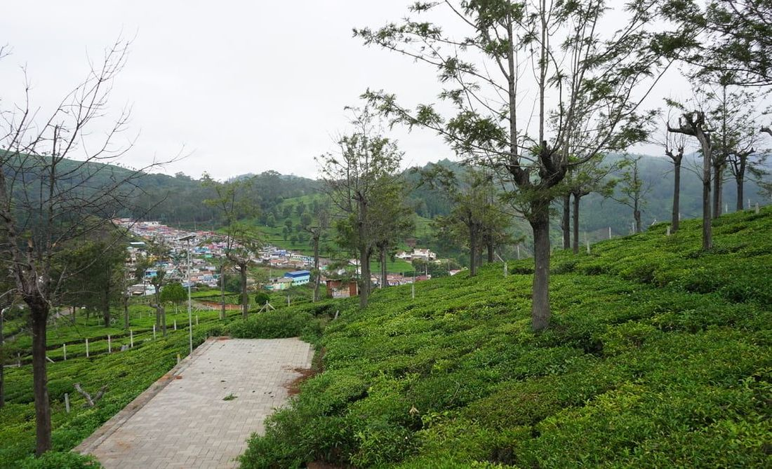 Paved road at Sua Serenitea, Drumella estate