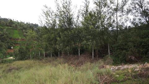 Plot 20 Creekside - Boundary Trees