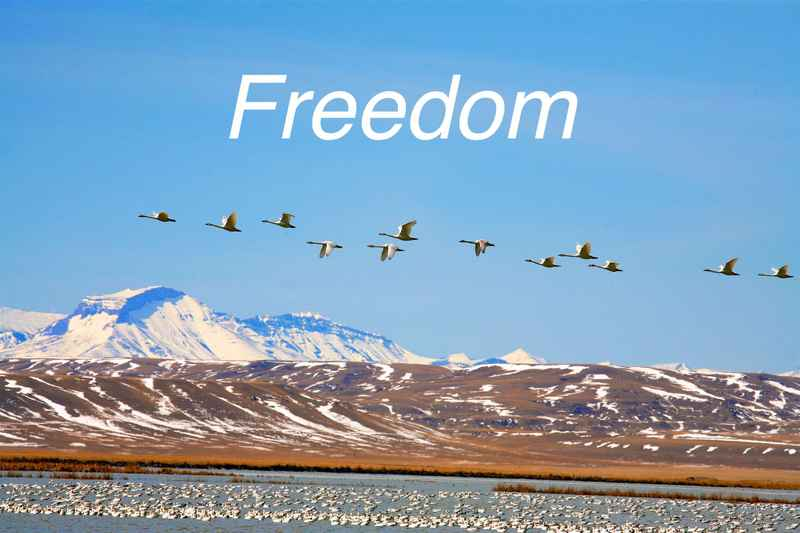 Freedom2 1