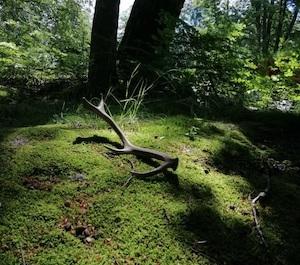 Atrakcja Ogród Ducha Gór. Pod Smerkami - Szklarska Poręba   Domki, Pokoje, Nocleg
