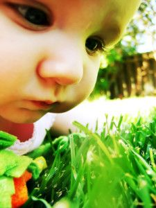 Baby examining grass