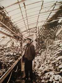A photo of Gustave Caillebotte (1848-1894) in his greenhouse Petit Gennevilliers, in February 1892
