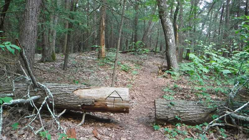 Log cut on trail