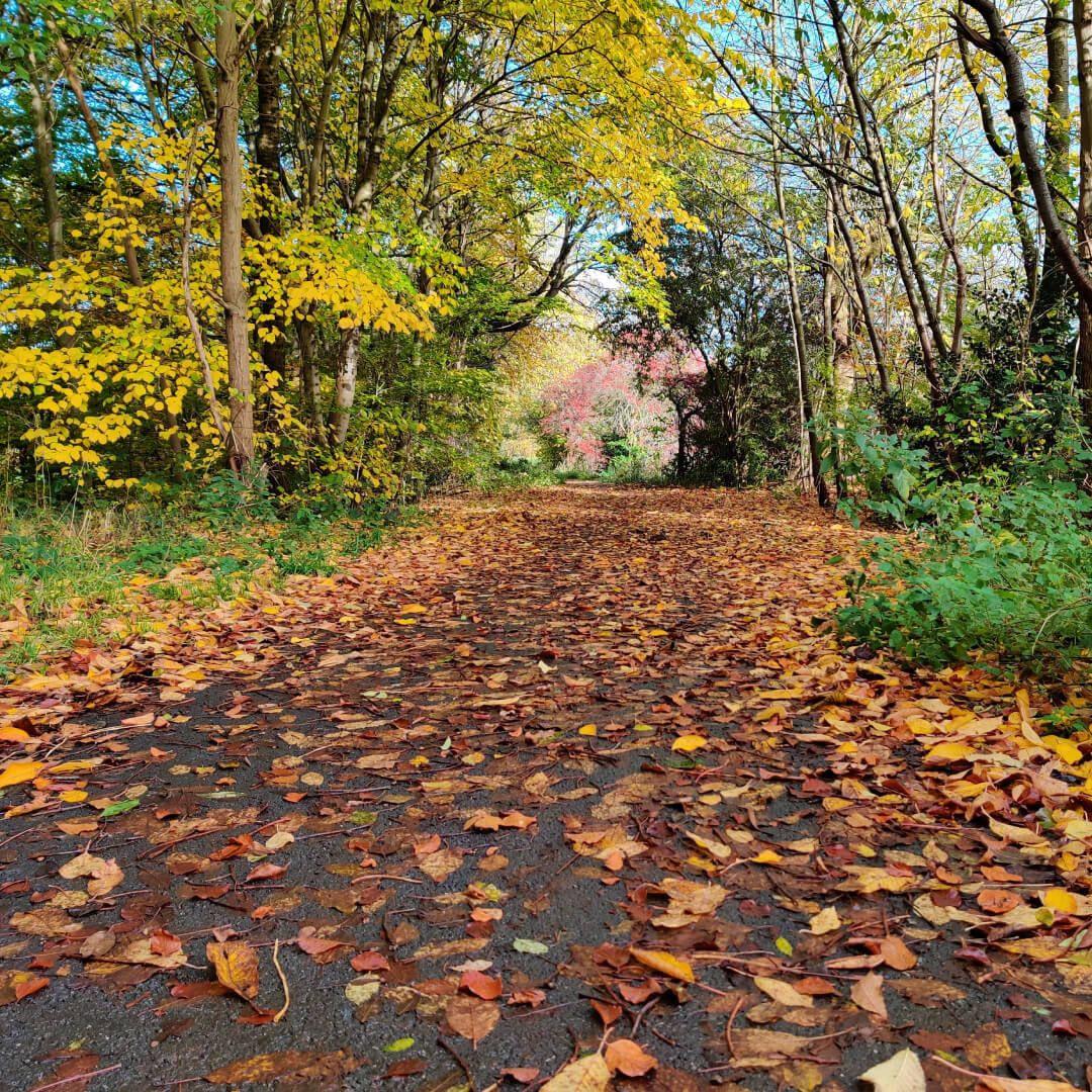 Gotts Park path in Autumn