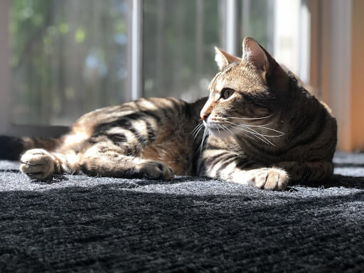 Cat sitting.