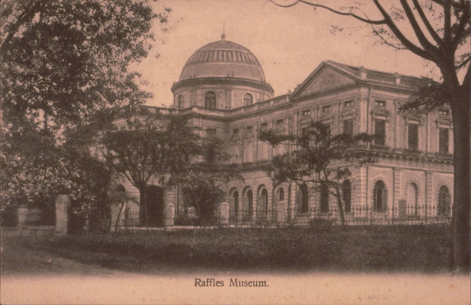 Raffles Library and Museum, 1900s
