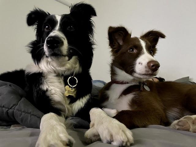 Nina y Alyx, como perras finas