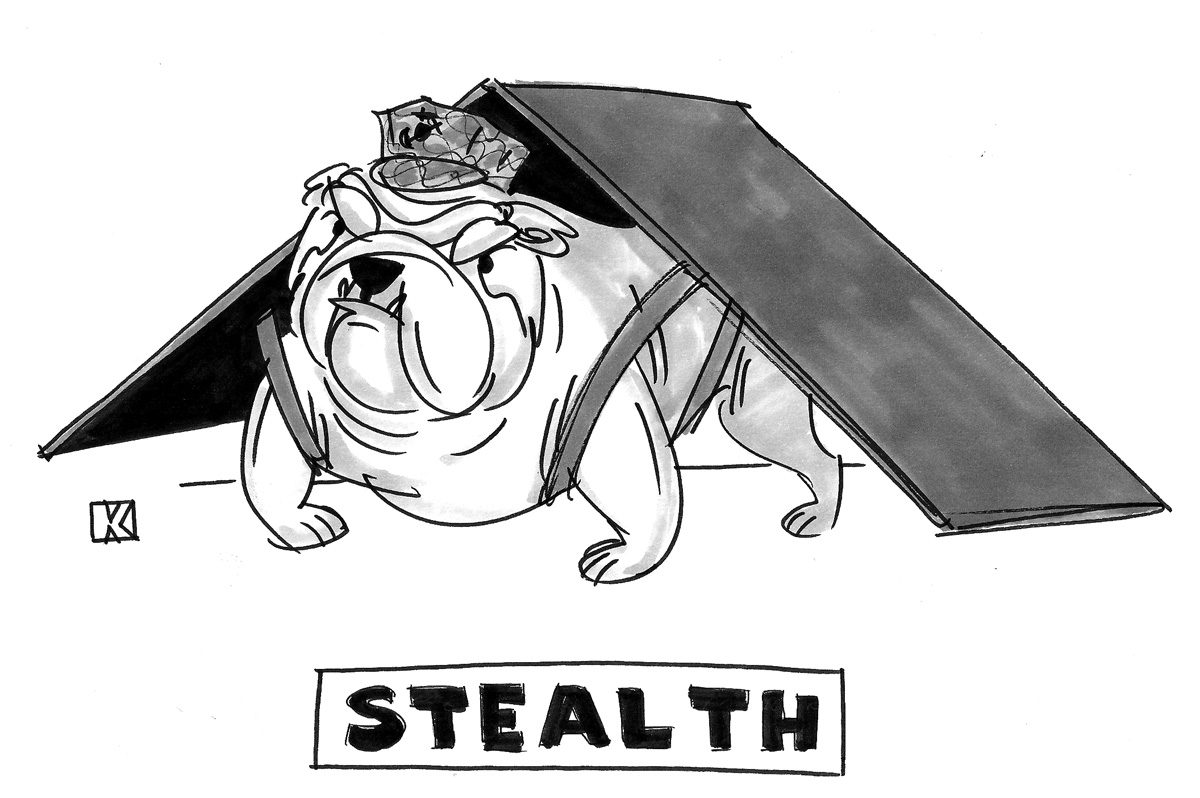 (Bulldog wears triangular cover, caption reads: 'Stealth.')