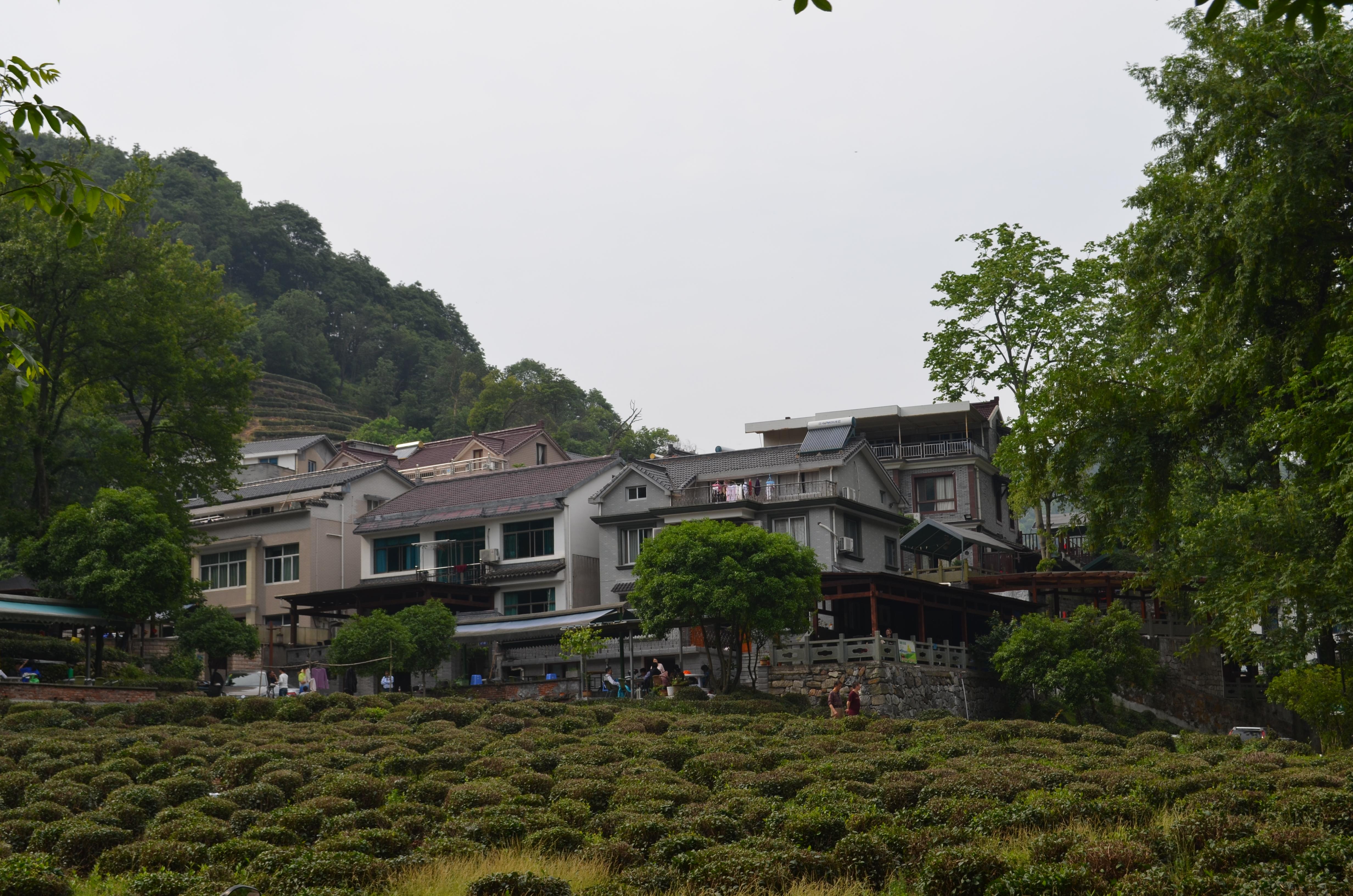 Und auf einmal ist da ein Dorf, umgeben von Teesträuchern.