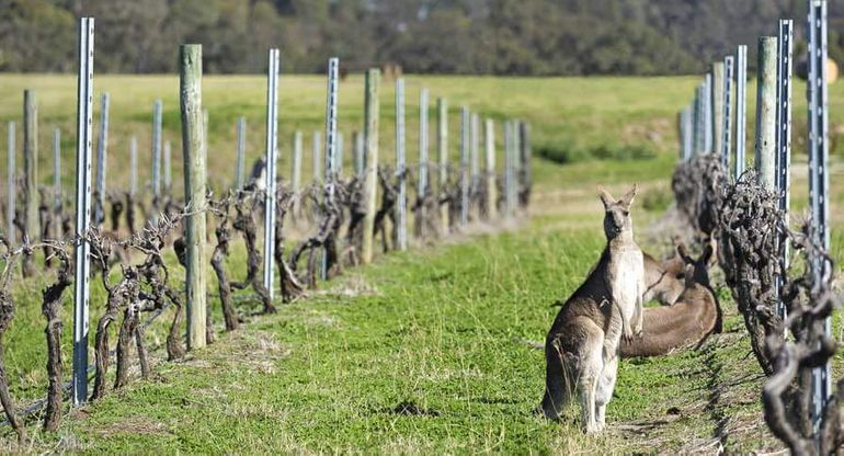 The Perfect East Coast Australian Road Trip Itinerary