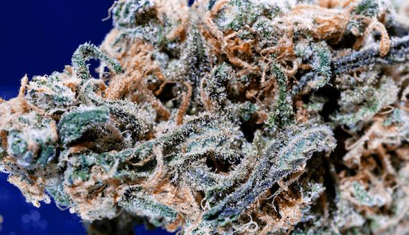 Snoop's Dream marijuana strain and ASMR