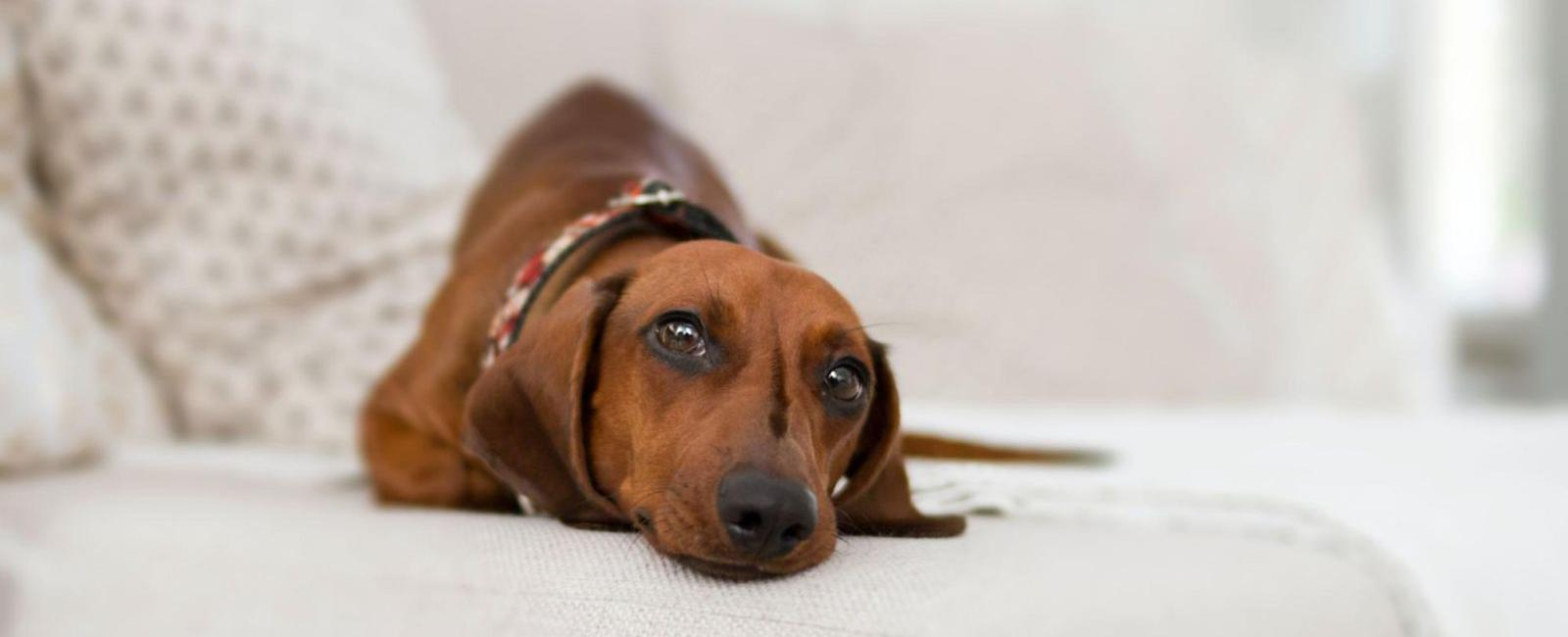 Your Dog Doesn't Bark? Here's Why