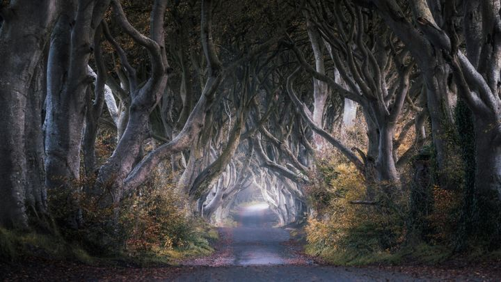 Game of Thrones Tour Cauffeur Me Tour Location – Dark Hedges