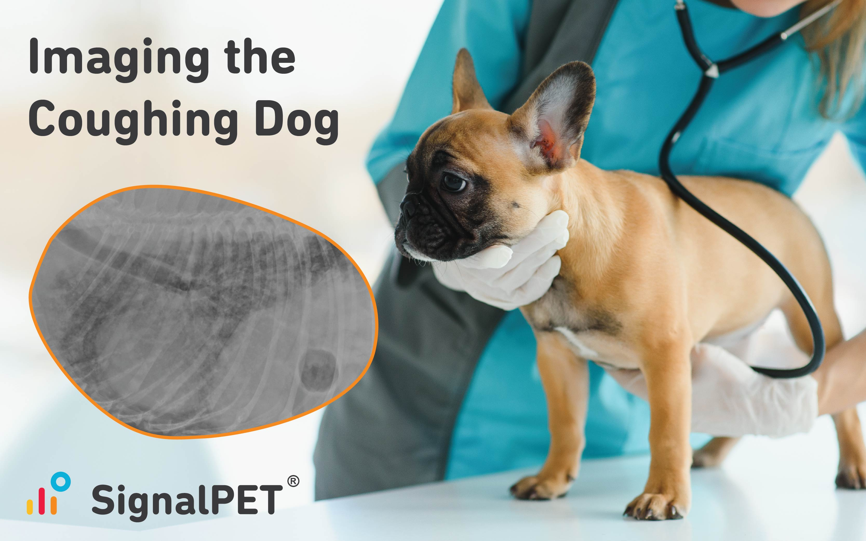 Radiographic images in coughing dogs