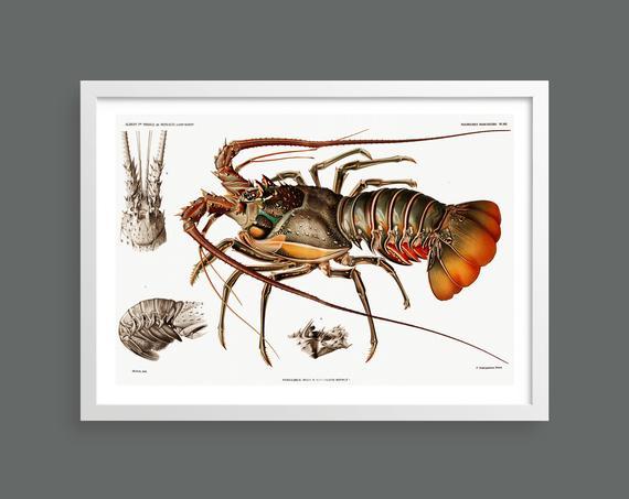 Lobster vintage print