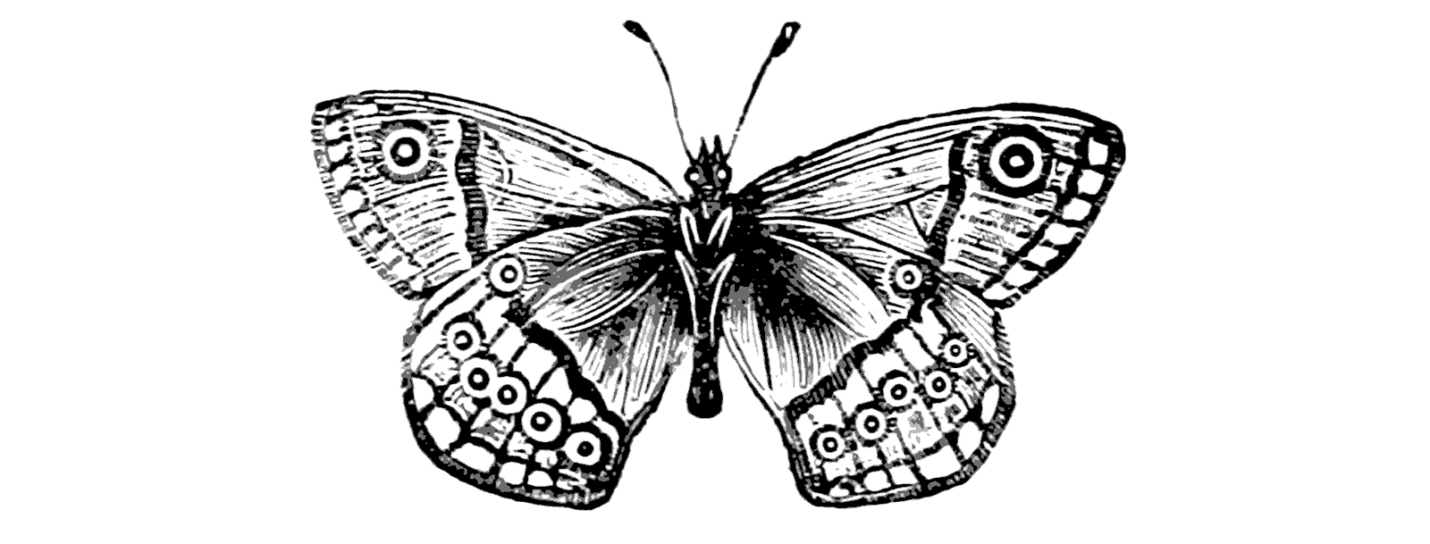 illustrations of victorian butterfly