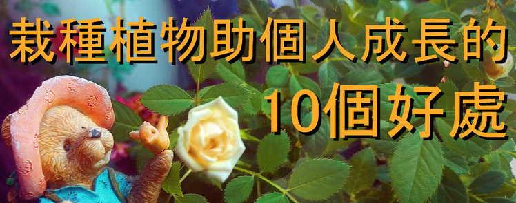 封面圖片(10個栽種植物對個人成長的好處  ─ 一齊親身體驗一下園藝的樂趣吧!)