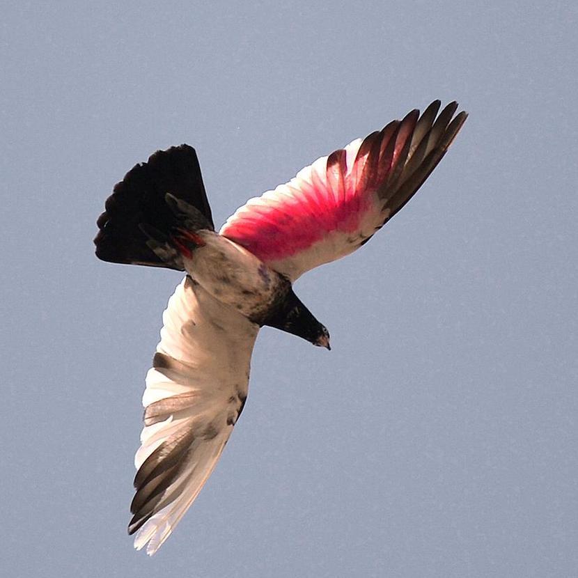 Ученые из Института орнитологии Макса Планка в Германии обнаружили, что некоторые птицы могут спать в полете. Фото: AAMIR QURESHI/AFP/GETTY IMAGES