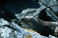 An Otter shakes itself dry