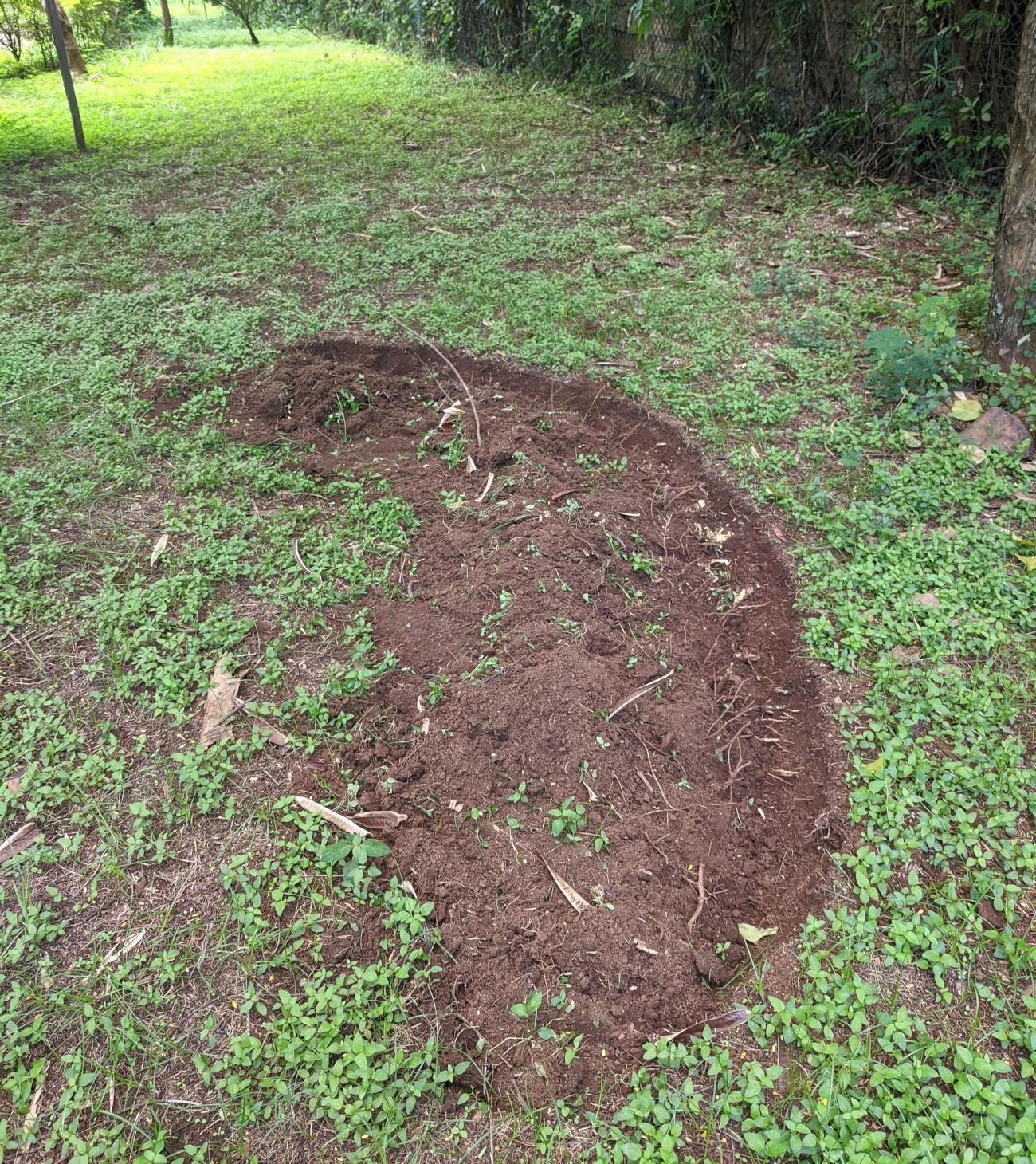 Digging a compost circle