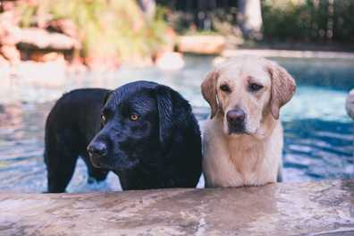 5 Labs Who Love Water