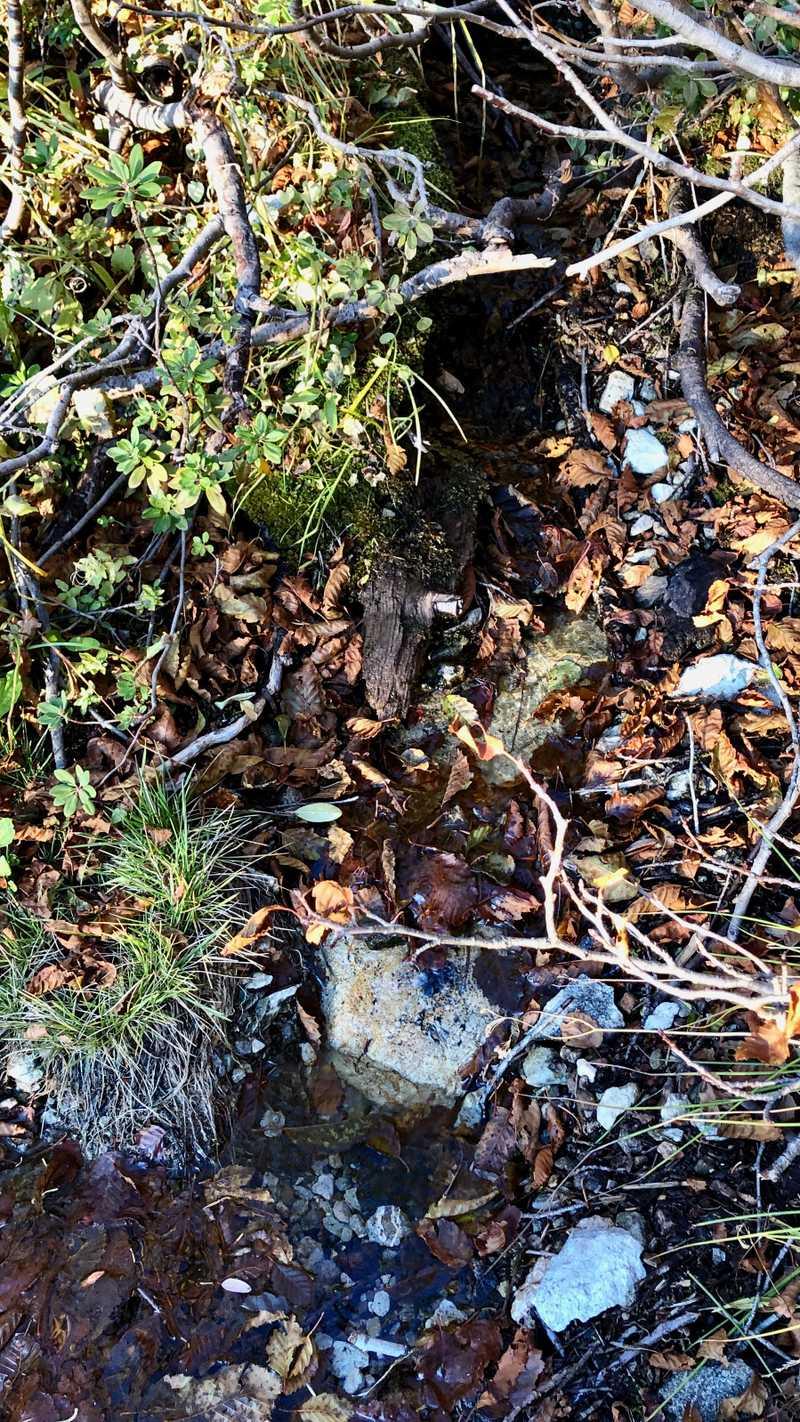 Sierra Buttes Spring