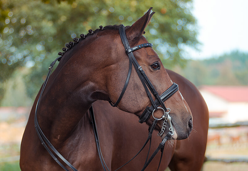 What is a double bridle?
