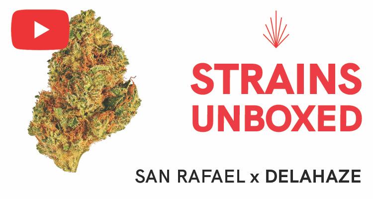 San Rafael Delahaze Strain