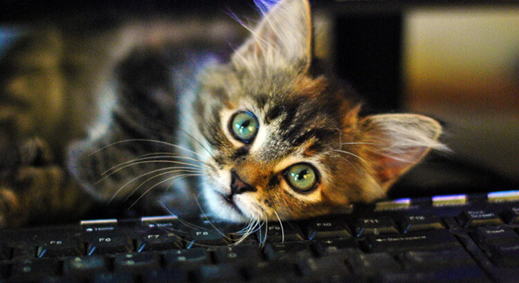 Cat laying on keyboard