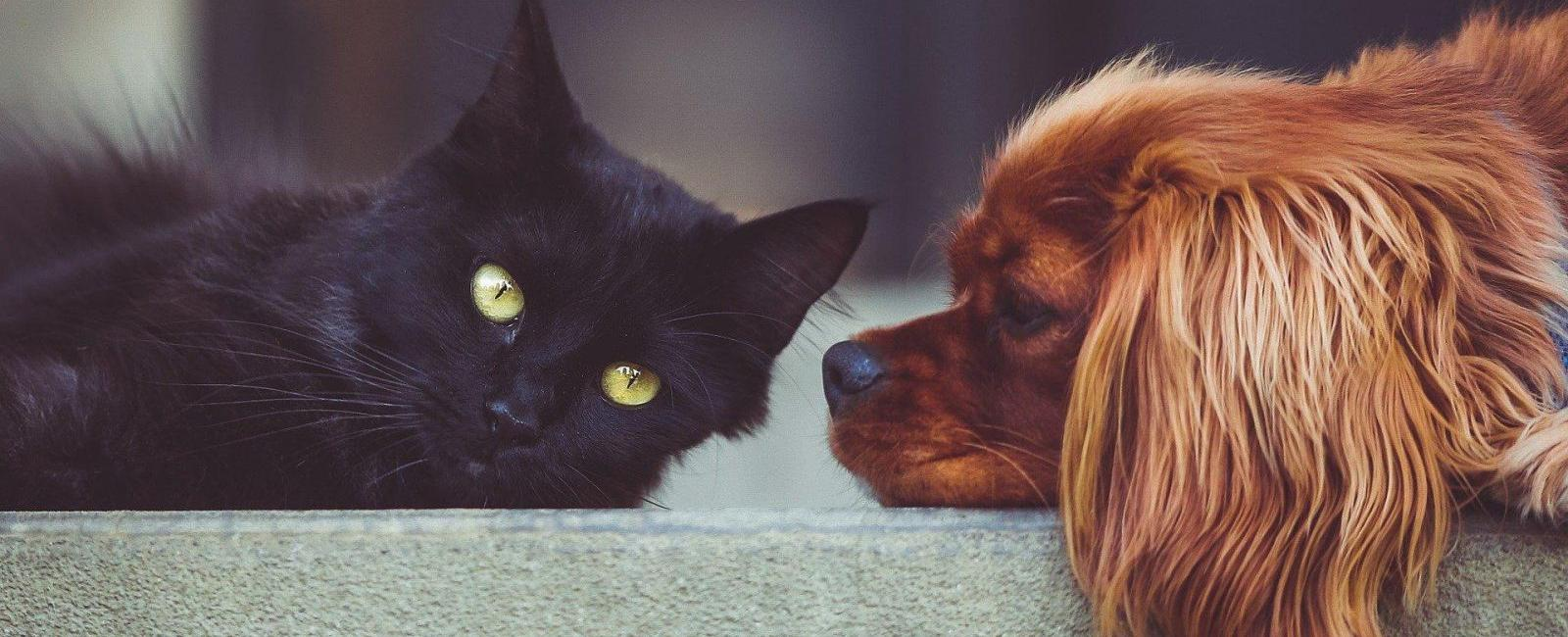 Your Dog Acts Like a Cat? Here's Why