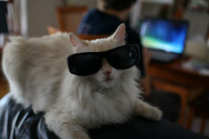 Cat wearing big sunglasses
