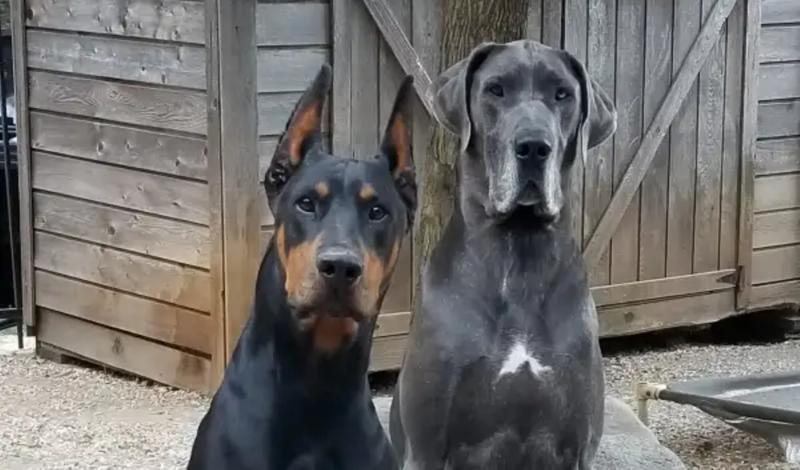 201602 big dogs