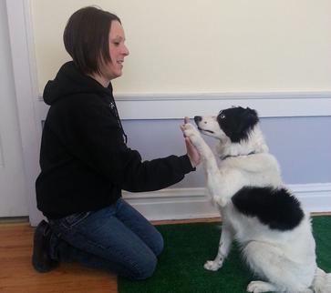 dog trainer trick training