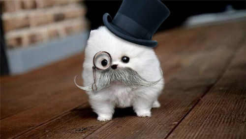 Fluff Ball Puppy with Top Hat \& Monocole