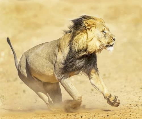 Google Maps Geocoding API Speed - Lion