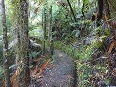 Climb on Wairoa Loop track