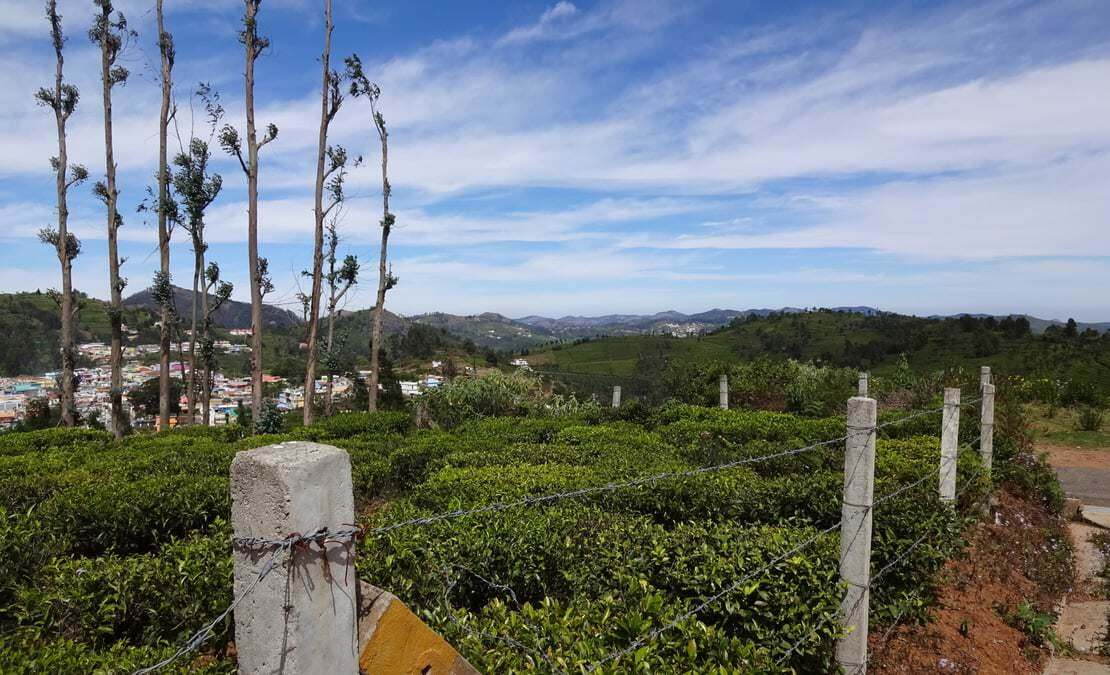 Views of Illithorai village and the tea estates on a sunny day