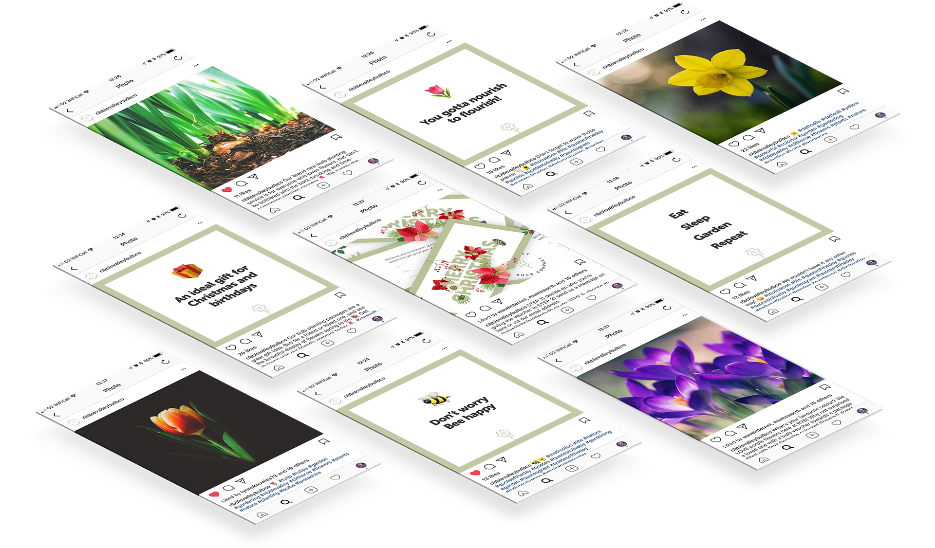 Launch campaign and social media management for Ribble Valley Bulb Company