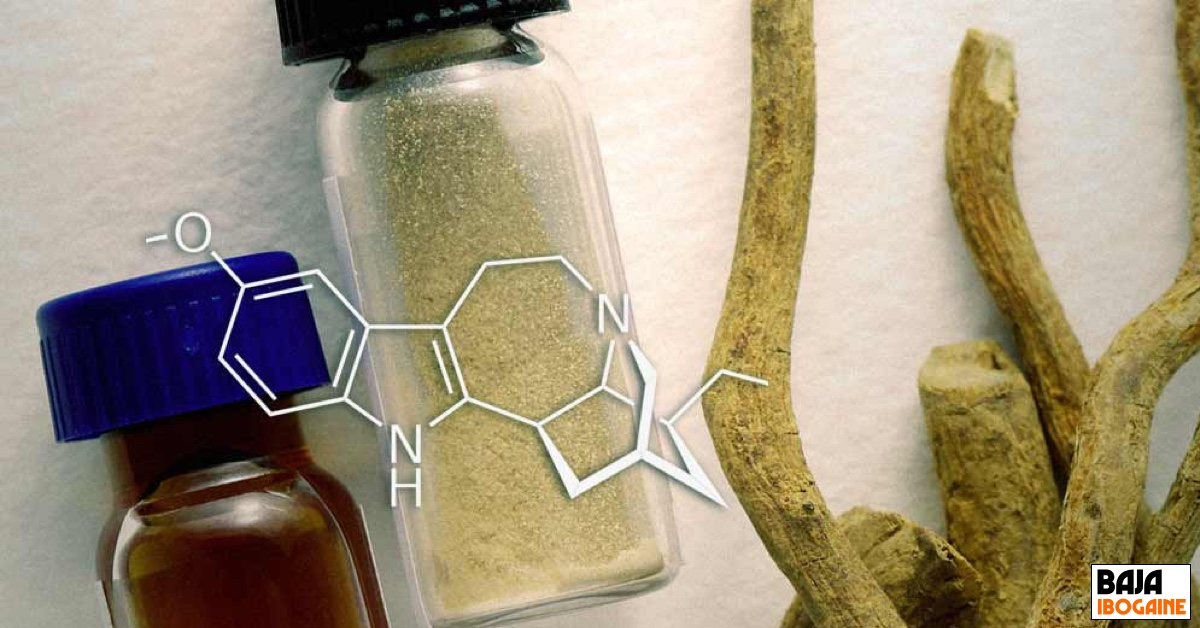 Greencamp Article by Helena Miles about Ibogaine