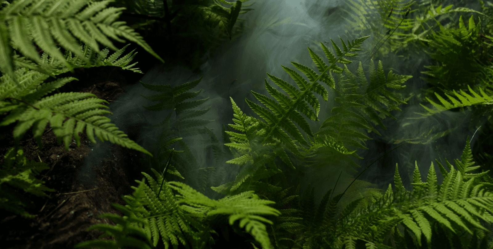 Ferns background image